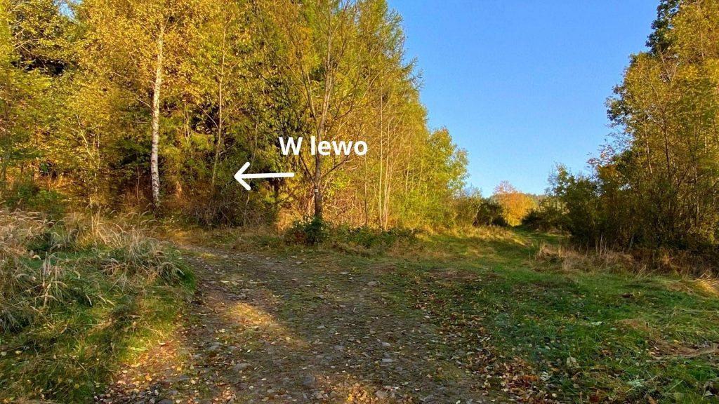 Droga na Łosek